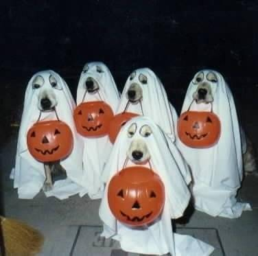 http://architecturemag.typepad.com/photos/uncategorized/2007/09/25/dog_halloween_2.jpg
